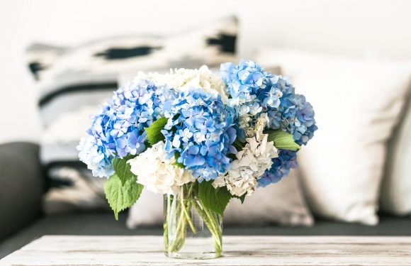 Having Flowers Shown to Improve Physical and Mental Health