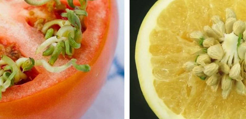 There's a Scientific Explanation for What's Happening with These Freaky-Looking Fruits