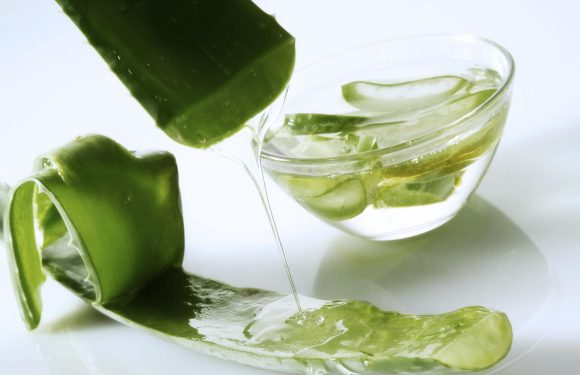 What Is Aloe Vera—and Should You Eat It?