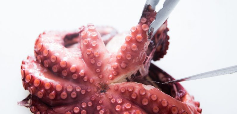 Perfectly Cooked Boiled Octopus Recipe