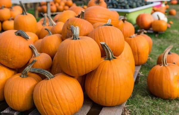 Don't Forget That You Can Eat Your Halloween Pumpkin