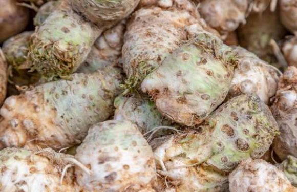 Celeriac: What Is It and What Does It Taste Like?