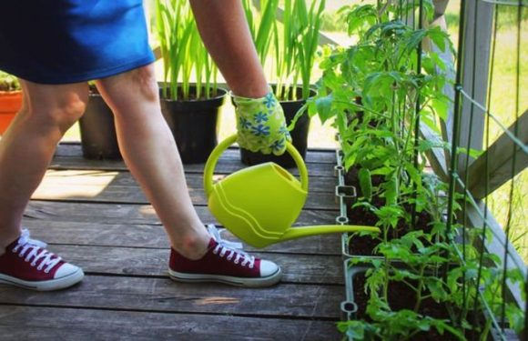 More Britons under 40 are growing fruit and veg at home, study finds